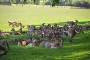 2014 Wildpark Poing 005