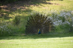 2014 Wildpark Poing 047